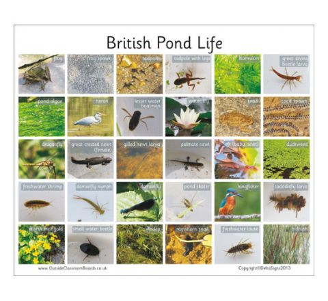 30 British Pond Life Board Each