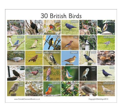 30 British Birds Board Each