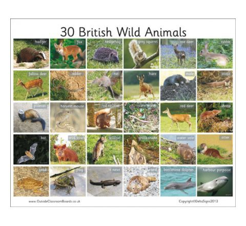 30 British Wild Animals Board Each