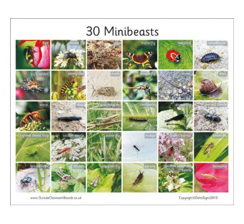 30 British Minibeasts Board Each